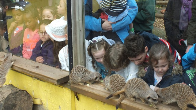 Parties Battersea Park Childrens Zoo - Children's birthday party london zoo